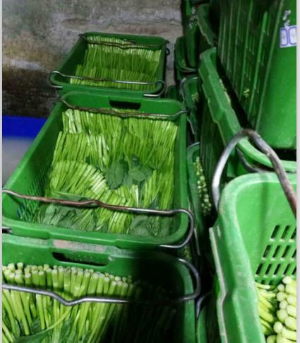 天津绿色蔬菜配送
