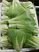 天津蔬菜配送服务中心